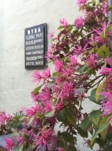 DTSA in Bloom