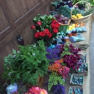Garden swap